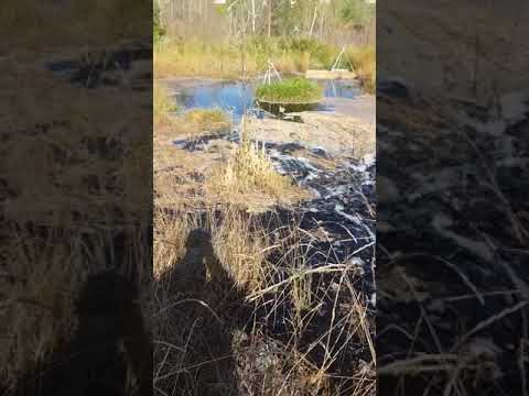 Охотники за металлоломом виноваты в экологическом бедствии местного розлива