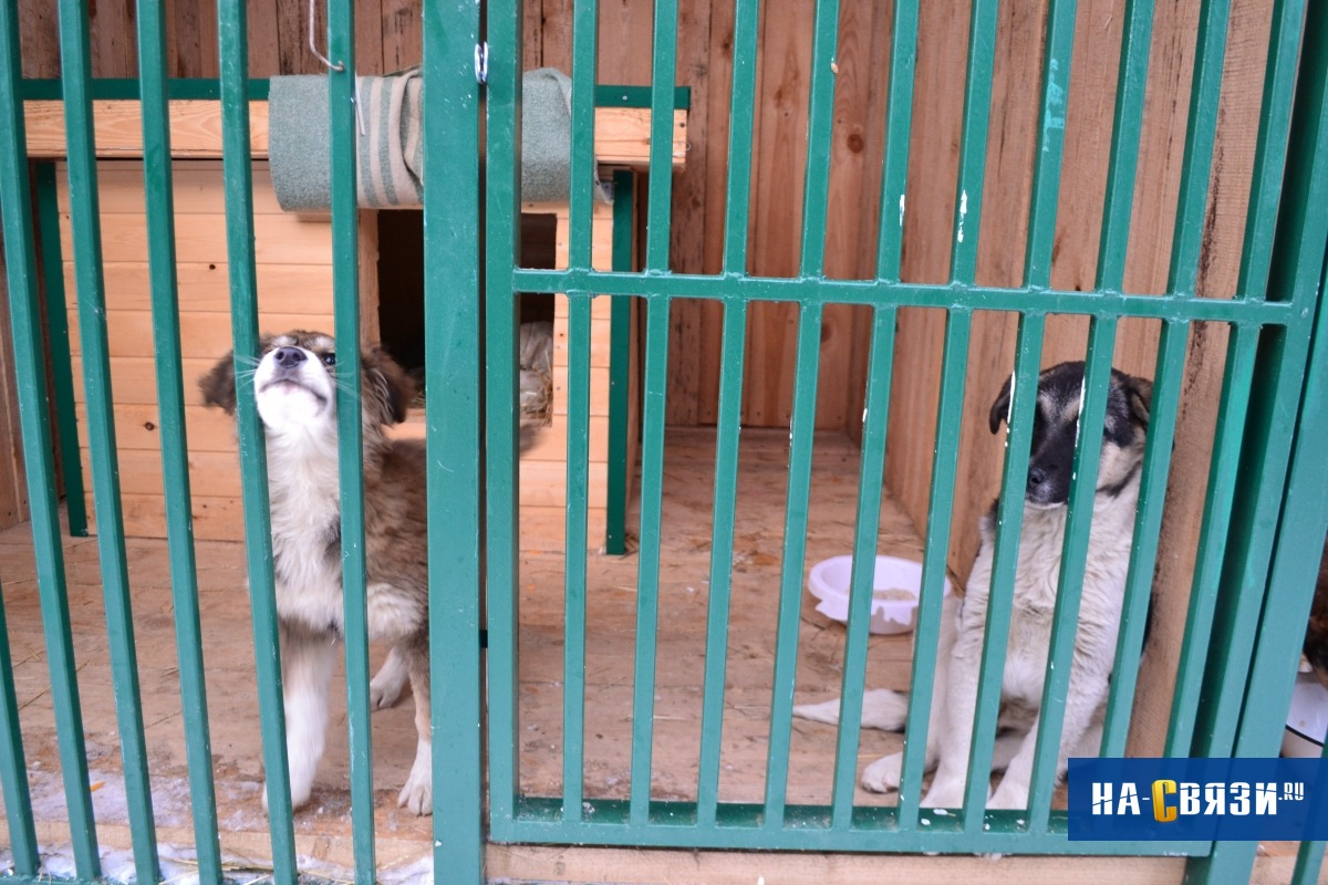 Депутаты предложили сделать онлайн-трансляцию из пункта передержки животных в Чебоксарах