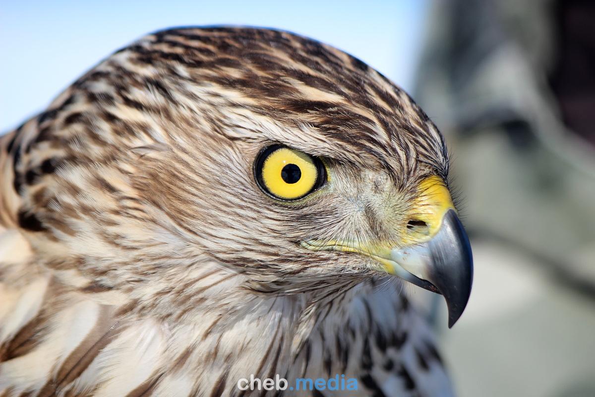 Ловчие птицы – на страже экологии